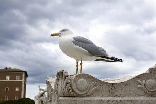Seagull, Sky, Bird, Bird Against Sky