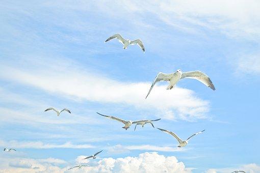 Gulls, Sky, Bird Against Sky, Bird, Seagull, Sea