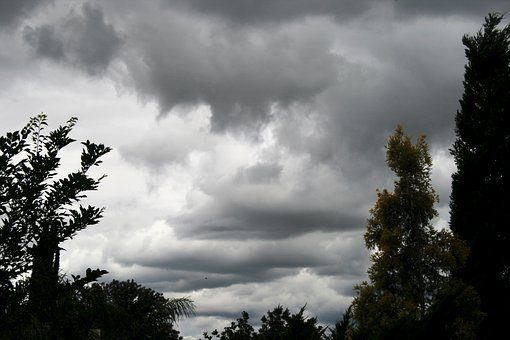 Dense Clouds, Day Time, Tall Trees Cypress