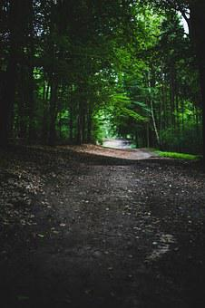 Woods, Forest, Nature, Road, Route, Way, Tree, Trees