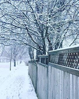 Winter, Trees, Snow, Street, Halifax