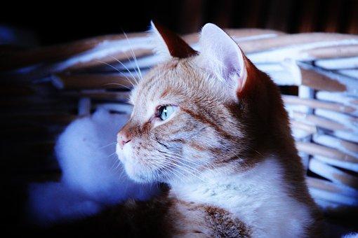 Cat, Dark, Rainy Day, Ears, Fur, Basket, Calm, Relaxed