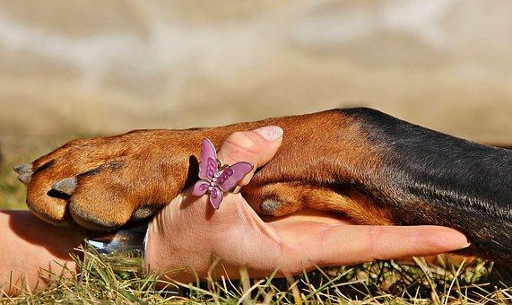 Dog Paw, Dog, I Have, Doberman, Friendship