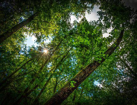 Forest, Tree, Nature, Sun, Adherent, Light, Summer