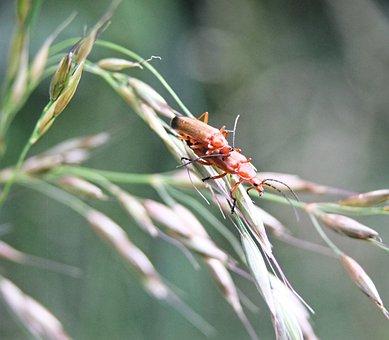 Beetle, Macro, Golden, Scarab, Gold, World, Plants, One