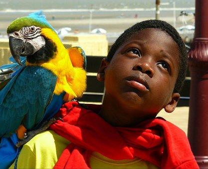 Boy, Child, Portrait, Parrot, Animal, Bird, Colorful