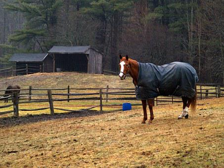 Horse, New Hampshire, Winter, Blanket, Outdoors, Rainy