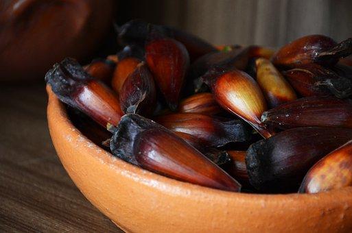Pinion, Typical Food, Southern Food, Santa Catarina