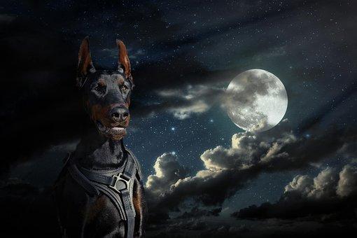 Moon, Doberman, Dog, Sky, At Night