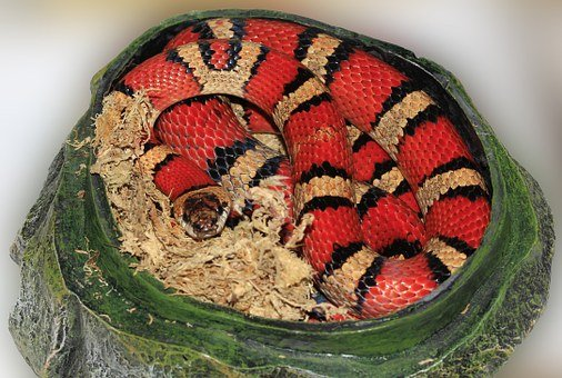Snake, King Snake, Striped, Red, Black, Colorful, Cave