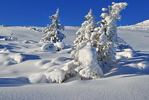 Winter, Snow, Tree, Snow-covered Trees, Spruce, Biel