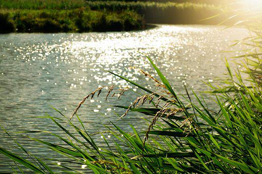 Glitter, Sparkle, Sunlight, Water, Light