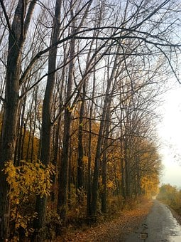 Autumn, Woods, Roads, Trees, Fall, Seasons, Yellow