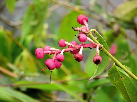 Ecuador, Amazonie, Wild Plant, Exotic Flower