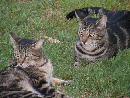 Cat, Feline, Animals, Curious, Pet, Domestic, Kitten