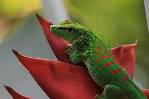Gecko, St Louis, Botanical, Garden, Climatron