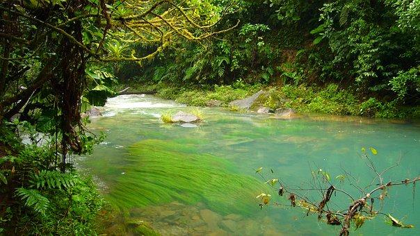 River, Water, Celeste, Jungle