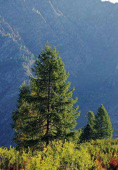 Tree, Larch, Mountains, Sunny Day, Nature