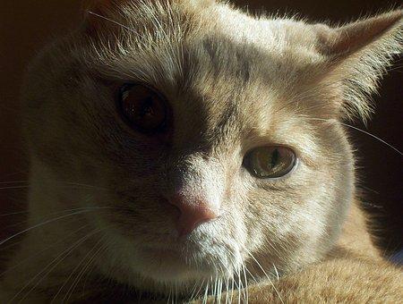 Cat, Pet, Animal, Kitten, Domestic, Feline, Kitty