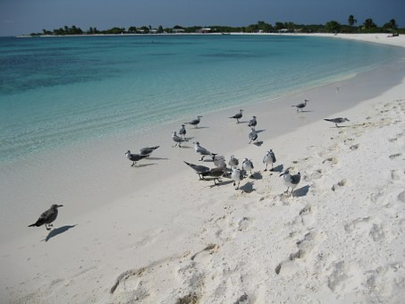 Sea, Beach, Seagulls, Nature, Los Roques