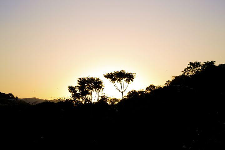 Tree, Sunset, Silhouette, Ipatinga, Brasil