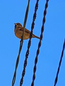 Sparrow, Sky, Cables