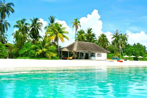 Maldives, Coconut Tree, Sea, Resort, Summer, Holiday