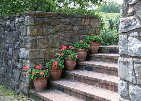 Garden, Outdoors, Wall, Steps Geraniums, Summer, Plant