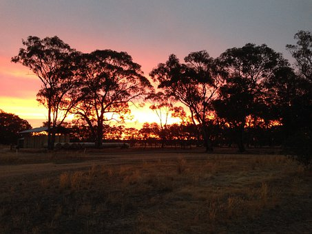 Sunset, Australian Outback, Tree Silhouettes, Tree