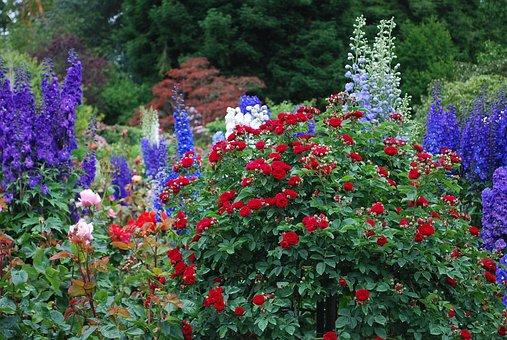 Butchart, Garden, Flower, Nature, Gardening, Tourism