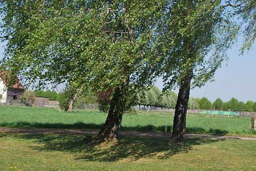 Landscape, Trees, Shrubs, Green, Grove, Nature, Tree