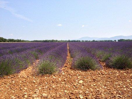 Valensole, Lavender, Summer, Haute Provence