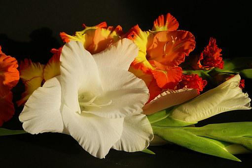Gladiolus, Flowers, White, Yellow, Orange, Bouquet