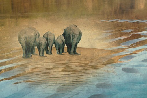 Elephant, Animals, Herd Of Elephants, Flock
