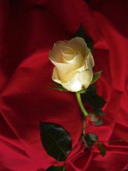 Rose, Yellow, Blossom, Bloom, Flower, Velvet, Blanket