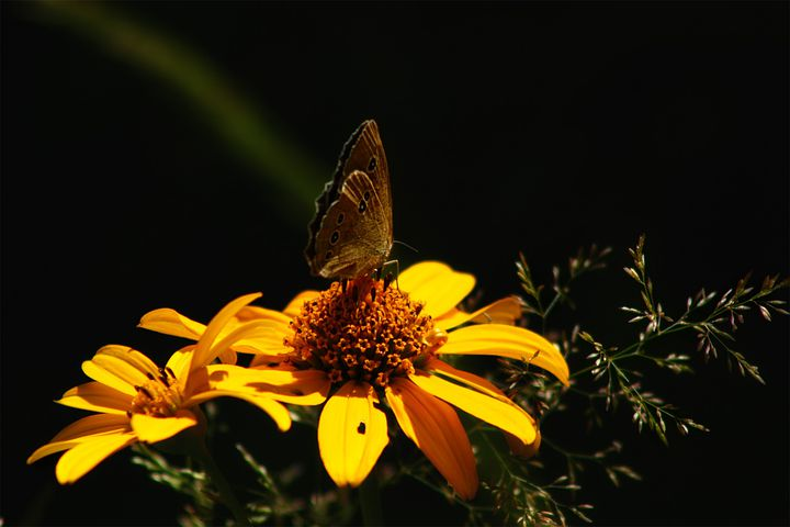 Butterfly, Insect, Animal, Wing, Colorful, Flower, Leaf