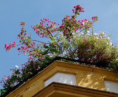 Roof, Rooftop, Architecture, House, Decoration, Flowers