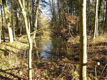 Rottenacker, Trail, Autumn Mood, Forest