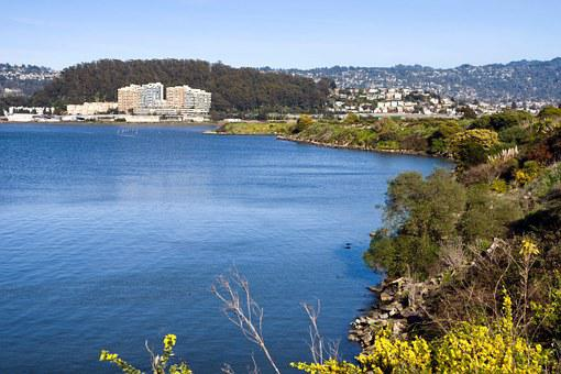 Albany, California, Lake, Water, Shoreline, Forest