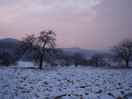 Wintry, Red, Violet, Sundgau, Snow, Winter, Cold, Iced