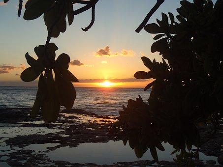 Hawaii, Sunset, Beach, Water, Tree, Brench, Silhouette