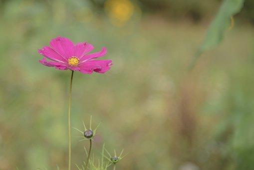 Primrose, Flower, Plant, Wild Herb, Wild Plant, Cut Out