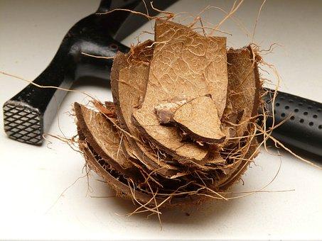 Coconut, Shell, Coconut Shell, Hammer, Open, Empty