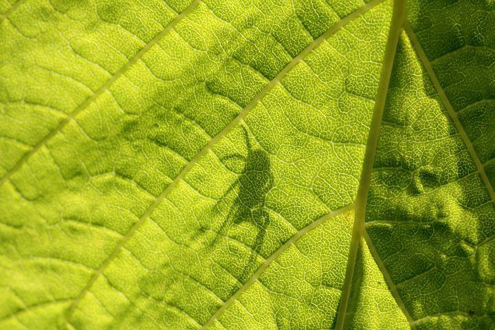 Sheet, Green, Shadow, Spider, Detail