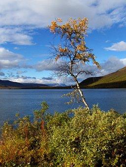 Lapland, Finnish, Nature, Autumn, The Lapland