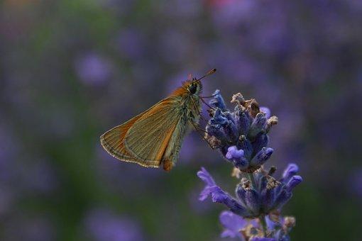 Butterfly, Nature, Animals, Flower, Violet, Garden