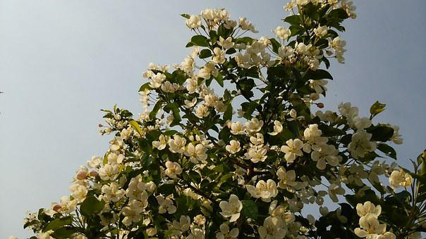 Flowers, Wood, Princess Apple, Natural
