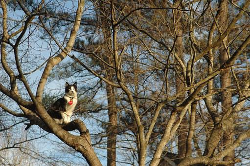 Cat, Tree, Pet, Outside, Nature, Feline, Cute Cat