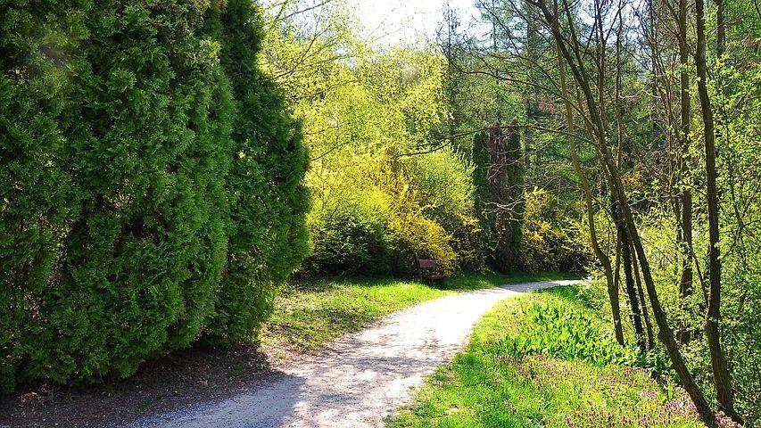 Spring, Nature, Strolling, Sunshine