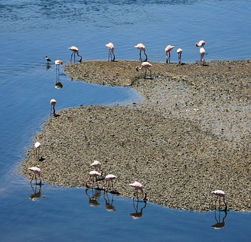 Flamingos, Water, Blue, Fauna, Bird, Longnecked, Swamp